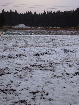 2014初積雪1.jpg
